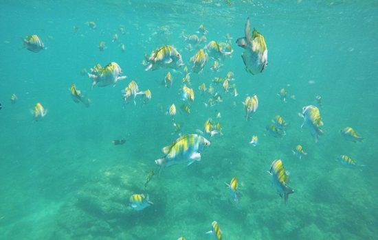 Tortuga-Island-Tour-Costa-Rica-13